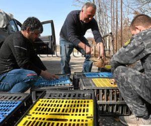250 фазана и 200 яребици разселват хасковските ловци