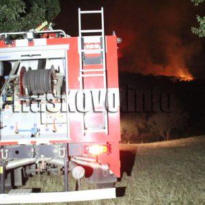 Близо 20 животни изгоряха при пожар в стопанска постройка