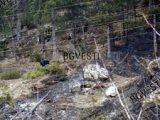 Възстановяват опожарени над 180 дк родопски гори с безвъзмездно финансиране от Фонд