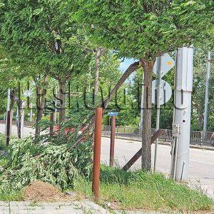 Силният вятър събори дървета в Хасковско