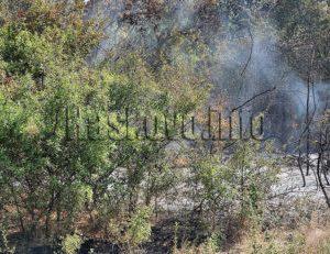 Горят стотици декари между Криво поле и Елена